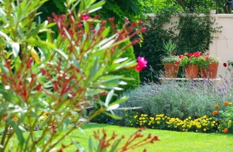 der garten im august farbenfrohe bl tenpracht myhammer magazin. Black Bedroom Furniture Sets. Home Design Ideas